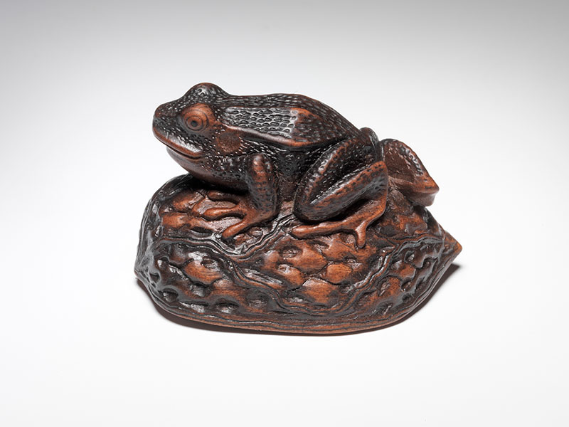Matsuda Sukenaga netsuke of a frog on a walnut shell